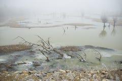 在沼泽的冷的早晨 免版税库存照片