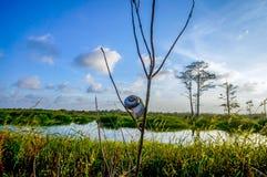 在沼泽的壳 图库摄影