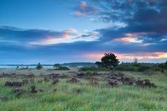在沼泽的夏天日出有石南花的 图库摄影