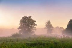 在沼泽的夏天有薄雾的黎明 有雾的沼泽早晨 免版税库存图片