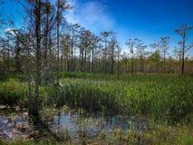 在沼泽的夏天 免版税库存图片