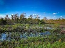 在沼泽的夏天 免版税图库摄影