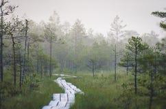 在沼泽的小足迹 免版税库存图片