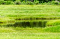 在沼泽的平静 库存图片