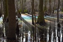 在沼泽的彩虹 免版税图库摄影
