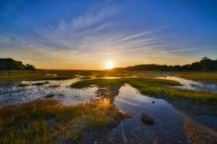 在沼泽的日出处于低潮中 库存图片