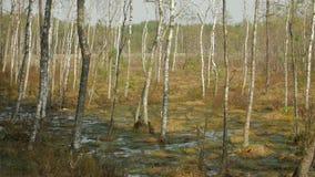 在沼泽的春天 股票视频