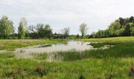 在沼泽的春天 免版税库存照片