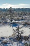 在沼泽的晴朗的冬日 图库摄影