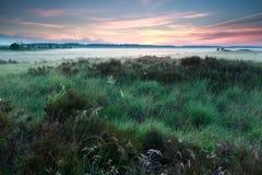 在沼泽的有薄雾的夏天日出 免版税库存照片