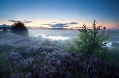 在沼泽的有薄雾的早晨与石南花 库存照片