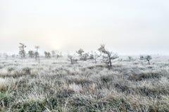 在沼泽的有雾的黎明 免版税库存照片