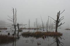 在沼泽的有雾的redlection 免版税库存照片