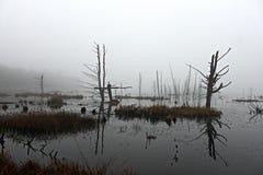 在沼泽的有雾的redlection 库存照片