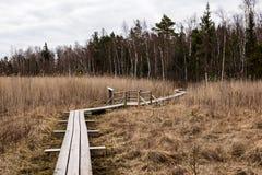 在沼泽的木人行桥 免版税图库摄影