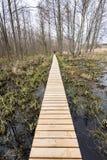 在沼泽的木人行桥 免版税库存照片