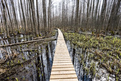 在沼泽的木人行桥 库存照片