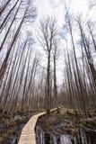 在沼泽的木人行桥 免版税库存图片
