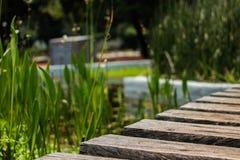 在沼泽的木微小的桥梁 免版税库存照片
