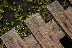 在沼泽的木微小的桥梁 免版税库存图片