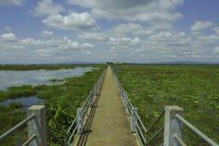 在沼泽的桥梁在泰国 免版税库存照片