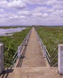 在沼泽的桥梁在泰国 免版税库存图片