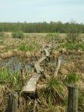 在沼泽的桥梁 免版税库存照片