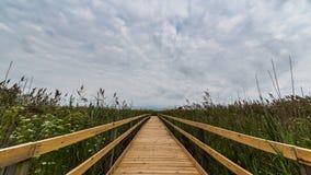 在沼泽的桥梁 免版税库存图片