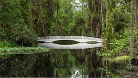 在沼泽的桥梁 库存图片