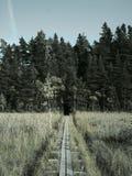 在沼泽的泥板 图库摄影