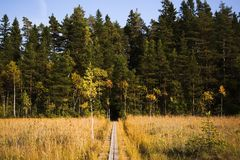 在沼泽的泥板 免版税图库摄影