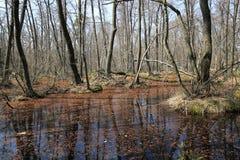 在沼泽的洪水在森林里 免版税库存图片