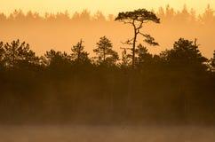 在沼泽的温暖的日落颜色 库存照片