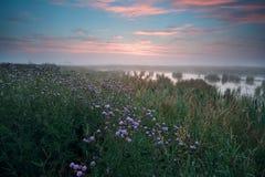 在沼泽的温暖的有薄雾的日出 免版税库存照片