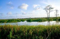 在沼泽的白天 库存照片