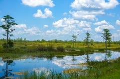 在沼泽的白色鸟飞行 免版税库存照片