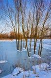 在沼泽的看法。草和水。 免版税库存照片