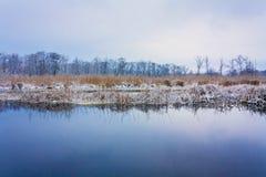 在沼泽的看法。草和水。 库存图片