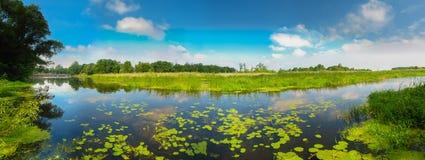 在沼泽的看法。 免版税库存照片