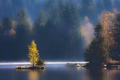 在沼泽的秋天在孚日省山 免版税库存照片