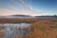 在沼泽的秋天早晨 免版税库存照片
