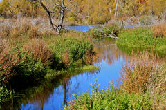 在沼泽的秋天 免版税库存照片