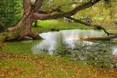 在沼泽的秋天 库存图片