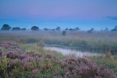 在沼泽的美好的镇静有薄雾的日出 库存图片