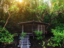 在沼泽的老木小屋在树丛木头中 库存图片