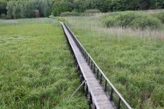 在沼泽的舟桥 免版税库存图片