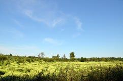 在沼泽的花 免版税库存图片
