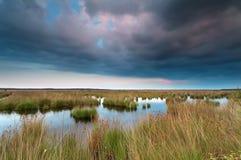 在沼泽的被覆盖的日落 图库摄影