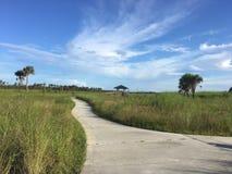 在沼泽的边路 免版税图库摄影