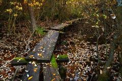 在沼泽的道路 库存照片
